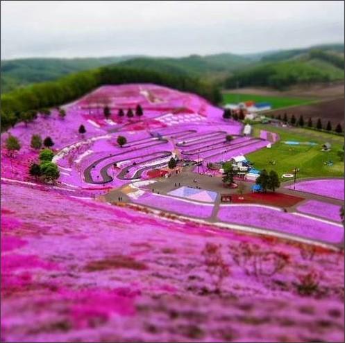 http://d4ulp9jtgcw4i.cloudfront.net/uploads/annotation/location_image/11240/thumb_Takinoue-Pink-Moss-Park-Japan.jpg