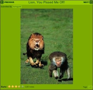 http://www.funnyjunk.com/funny_pictures/8747/Lion+You+Pissed+Me+Off/