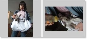 「わたしのママは人間!」赤ちゃんカンガルーを自作ポケットで飼育―浙江省寧波市:レコードチャイナ