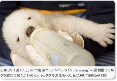 独動物園のホッキョクグマの赤ちゃん、ミルク飲む姿を公開 国際ニュース : AFPBB News