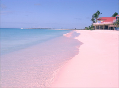 http://cdn.pcwallart.com/images/bahamas-pink-sand-beaches-wallpaper-3.jpg