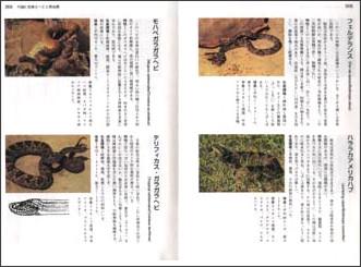 http://www.namiki-shobo.co.jp/survive/tachiyomi/survive015.htm