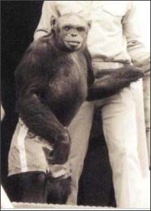 https://en.wikipedia.org/wiki/Oliver_the_chimpanzee