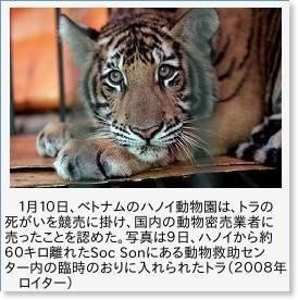 ハノイ動物園、死んだトラを密売人に売ったと白状   エキサイトニュース